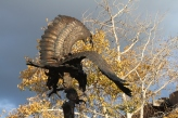 Descending eagle in bronze