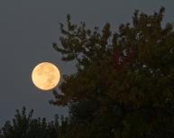 Setting moon