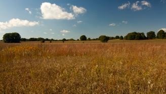 Scrub Oak Sand Prairie Nature Preserve